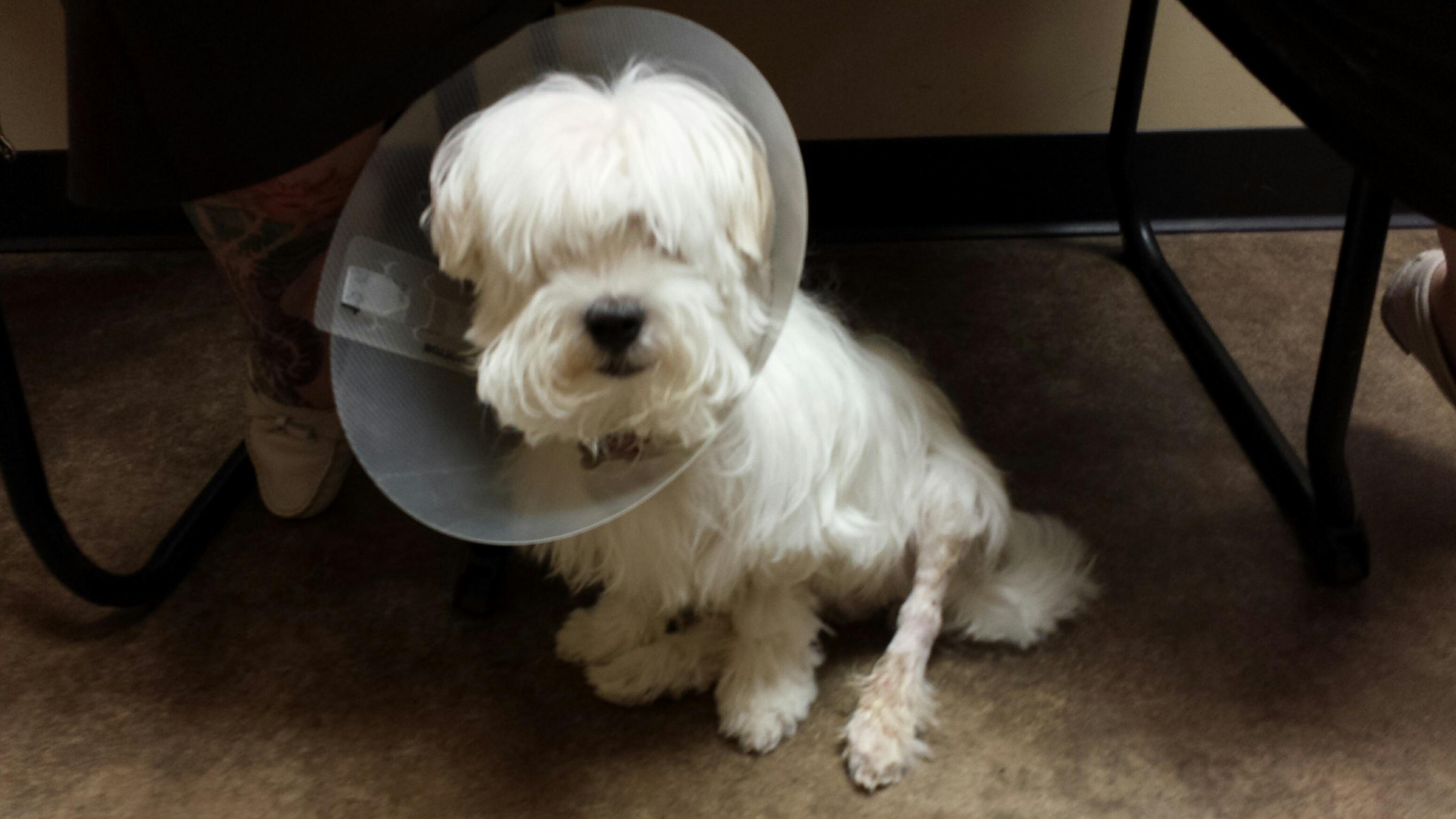 Casper after surgery